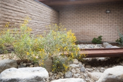 Bioswale with Brittle Bush